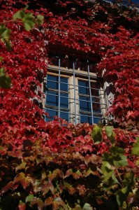 Saxonis Houses Guesthouse in Megalo Papigo during autumn