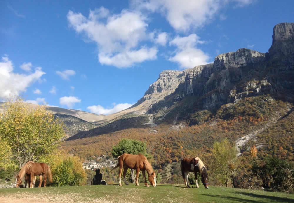 Στις δραστηριότητες τού Ξενώνα Τα σπίτια τού Σαξώνη στο Μεγάλο Πάπιγκο μπορείτε να επιλέξετε μεταξύ τού τρεκινγκ, τής ιππασίας και τού rafting