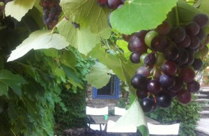 Traditional accommodation in Saxonis Houses Guesthouse - Hotel in Megalo papigo, Zagorohoria, Epirus, Ioannina | Vine & grapes